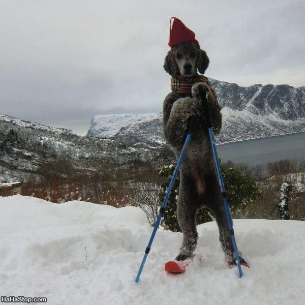 the_ski_dog.jpg