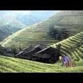 Döntésekről és következményekről: Egy kínai földműves története