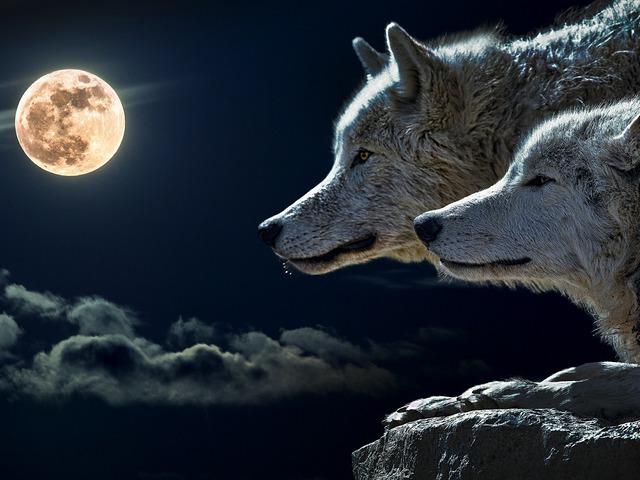 A sajópálfalai farkasember és egyéb határjelek