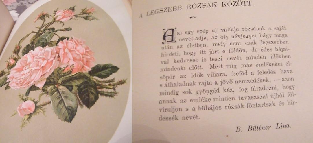 rozsa_elnevezes.jpg
