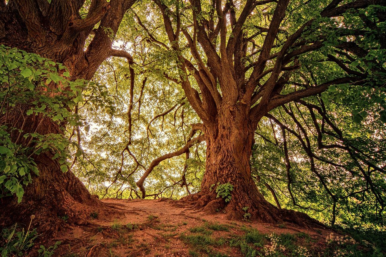 tree-3369950_1280.jpg