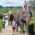 Thaiföld X - Elefánt