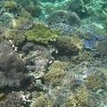 Indonézia VI - Gili szigetek - Teknőcinvázió