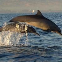 Indonézia IX - Lovina - Delfinek és robogók