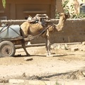 India VI - Jaisalmer és Barathpur