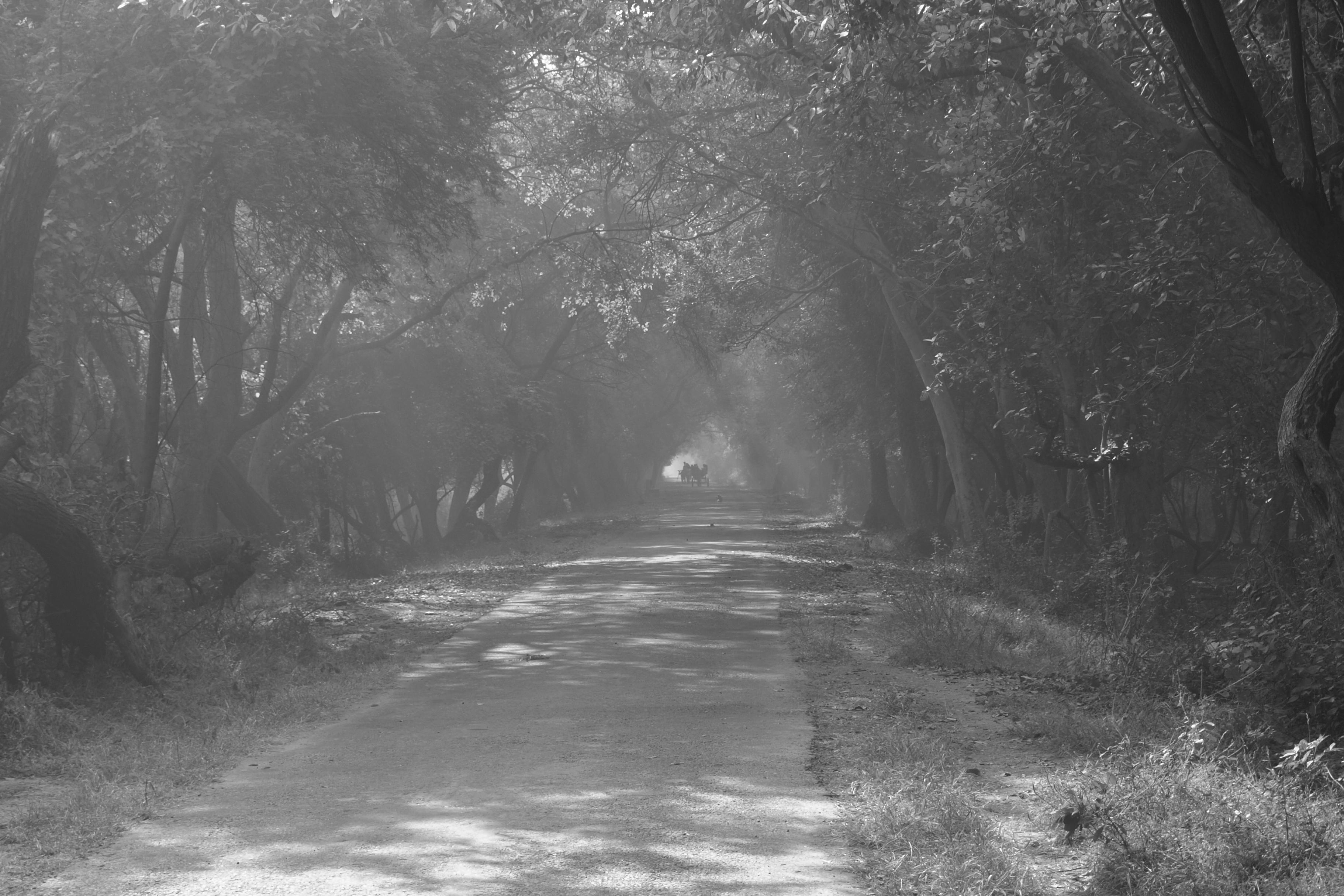 Mocsári ösvény Malajziában