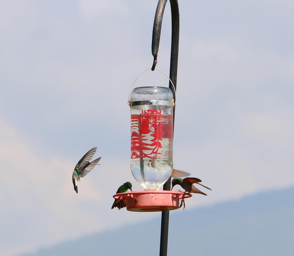kolibri1.jpg