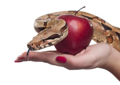apple-snake-temptation.jpg