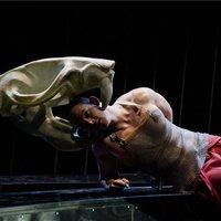 Macbeth, a patkány
