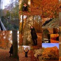 Berlinben az ősz...