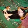 Mit tegyél, ha a kutyád pötse akkora, mint egy krinolin?