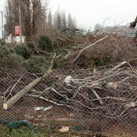 35 kivágott fa árán épül az MTK futócsarnoka