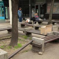 Kivágásra ítélt és megmentett fák -  közbeszerzés a Rákosfalva parkban
