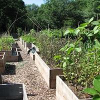 Közösségi kert Zugló módra