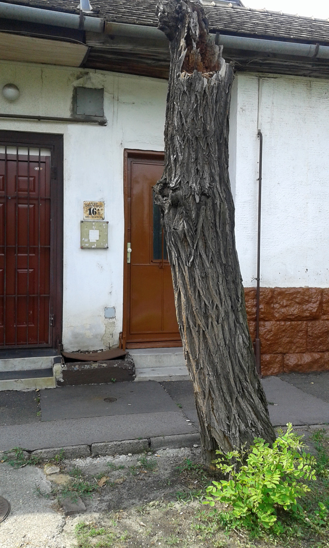 tabornok_fa.jpg