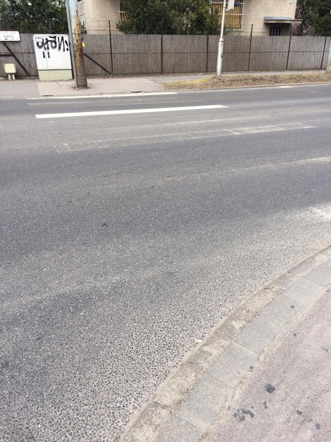 zebr_comori_miskolci_0340.jpg