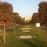 Kiégtek a fák a felújított Kiskörúton