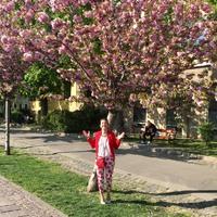 Láttátok már a cseresznyefavirágást a Budai Várban?