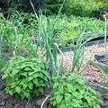 Bio kertészkedés élesben 1.: Ami eddig bejött:)