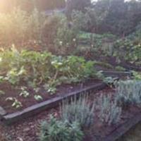 Bio kertészkedés élesben 2.: Így telt a nyár