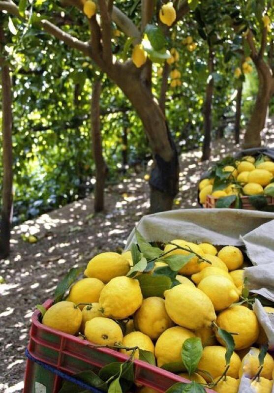 Limonádé citromból téli fűszer