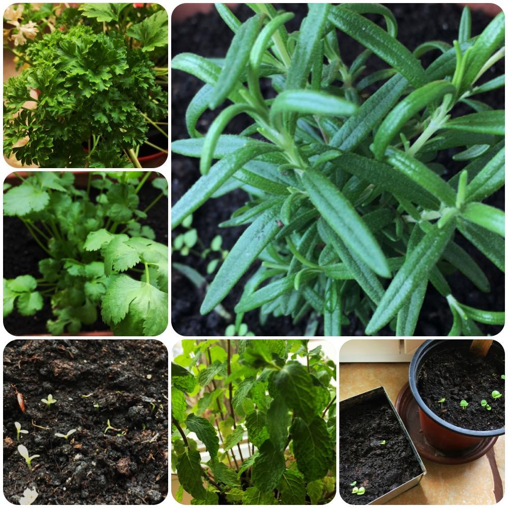 Ezeket a fűszernövényeket szerezd be idén!