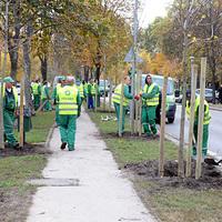 Már ültetik az új fákat Budapesten - ez legalább a kivágások egy részét kompenzálja
