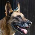 Méregkereső kutyákkal védik a madarakat