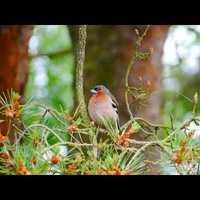 Bird Sound/MadárHang #34