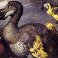 Fejbe lőtték az utolsó dodót