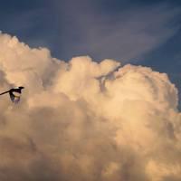 városi madár fotó vol.3