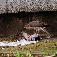 városi madár fotó vol.1