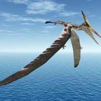 Őskori madár ölte és ette meg a neandervölgyi gyereket