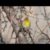 Bird Sound/MadárHang #9