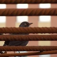 városi madár fotó vol.2
