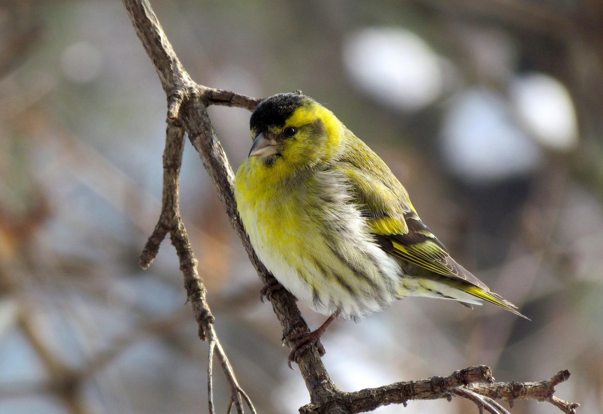 bird-1160460_1920.jpg