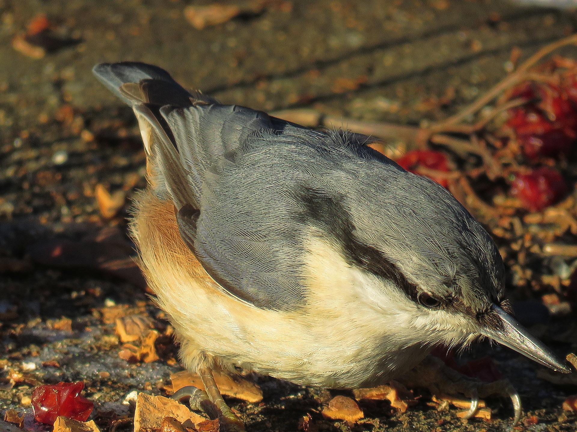bird-1949245_1920.jpg