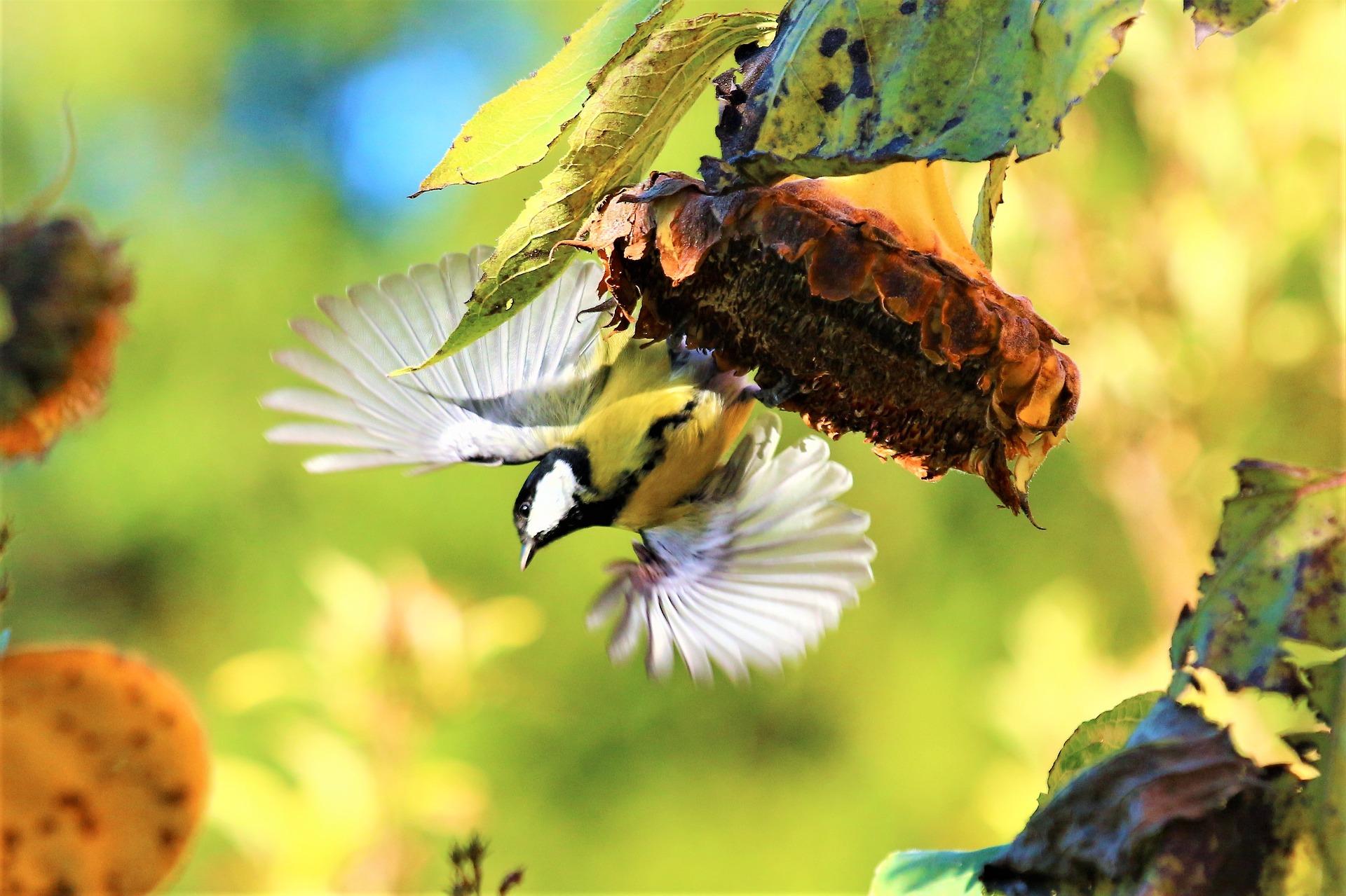 bird-2854442_1920.jpg