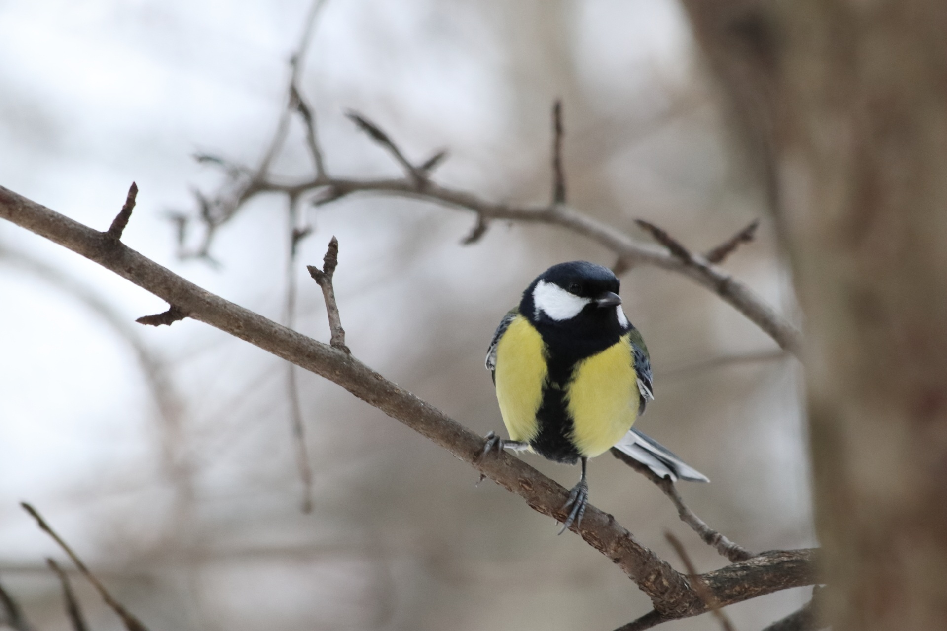 bird-3115408.jpg