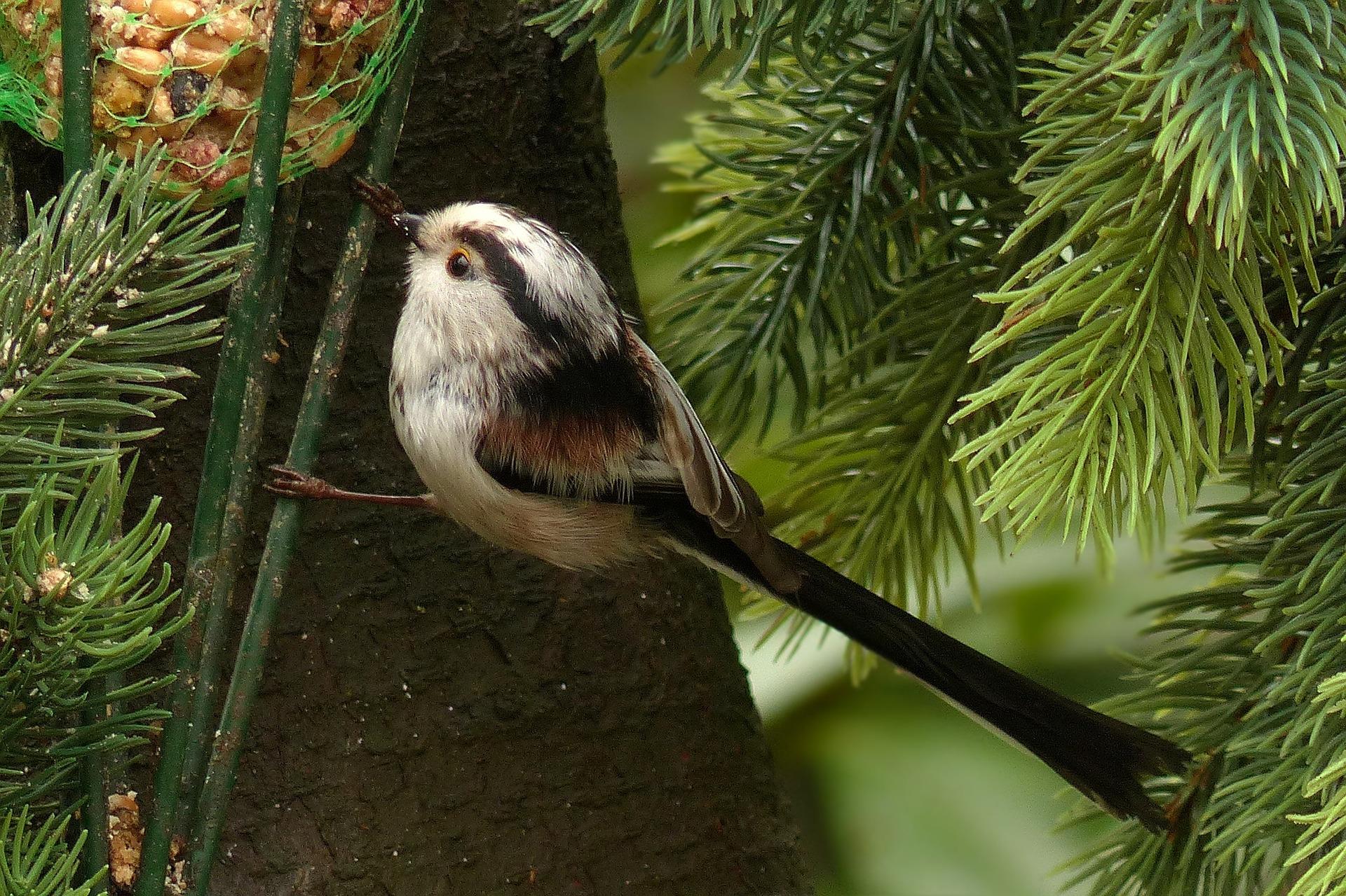 bird-675131_1920.jpg