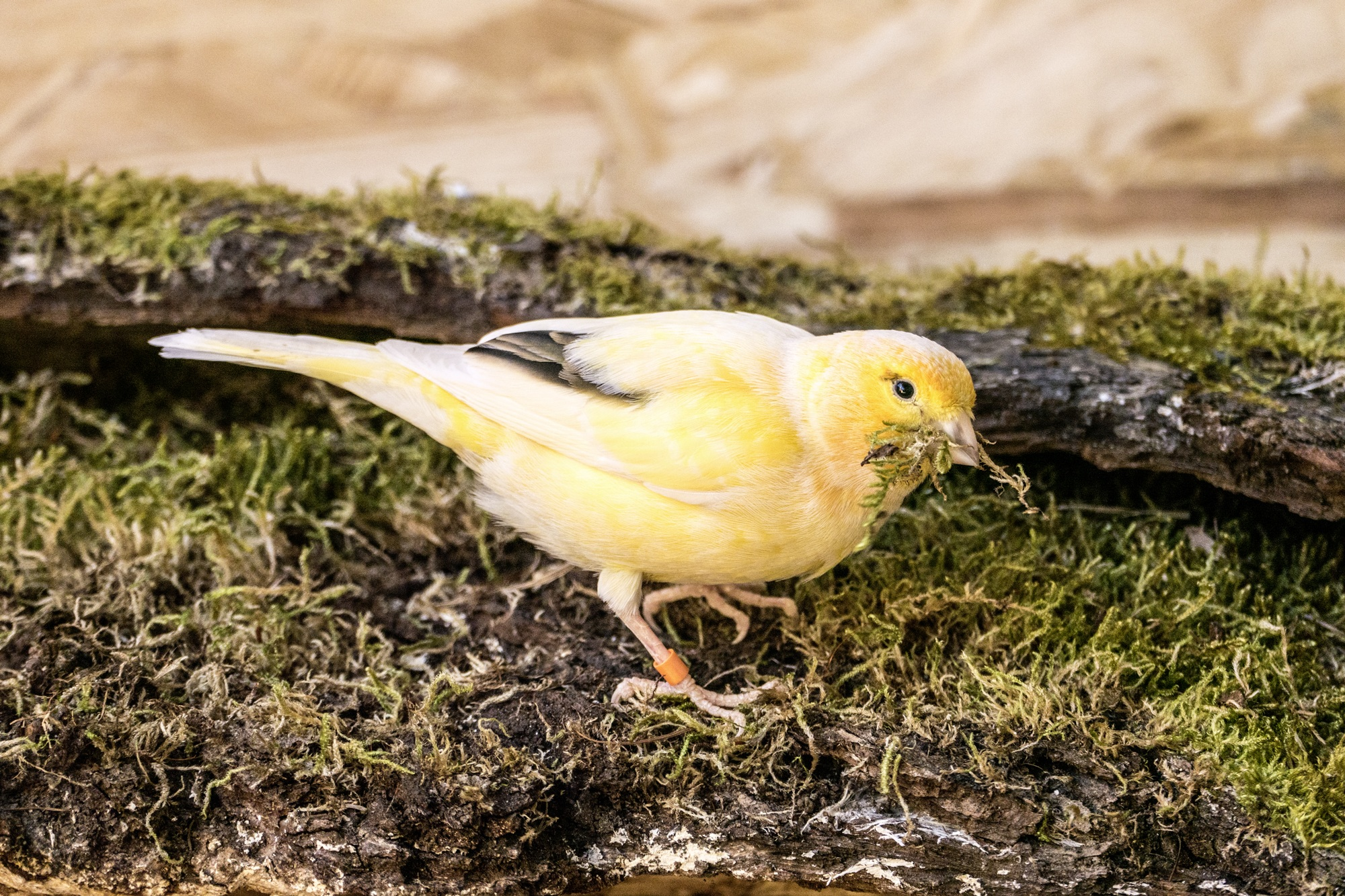 bird-743877.jpg