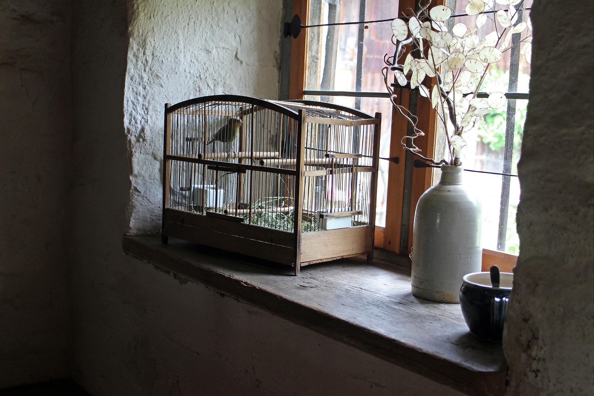 bird-cage-402205_1920.jpg