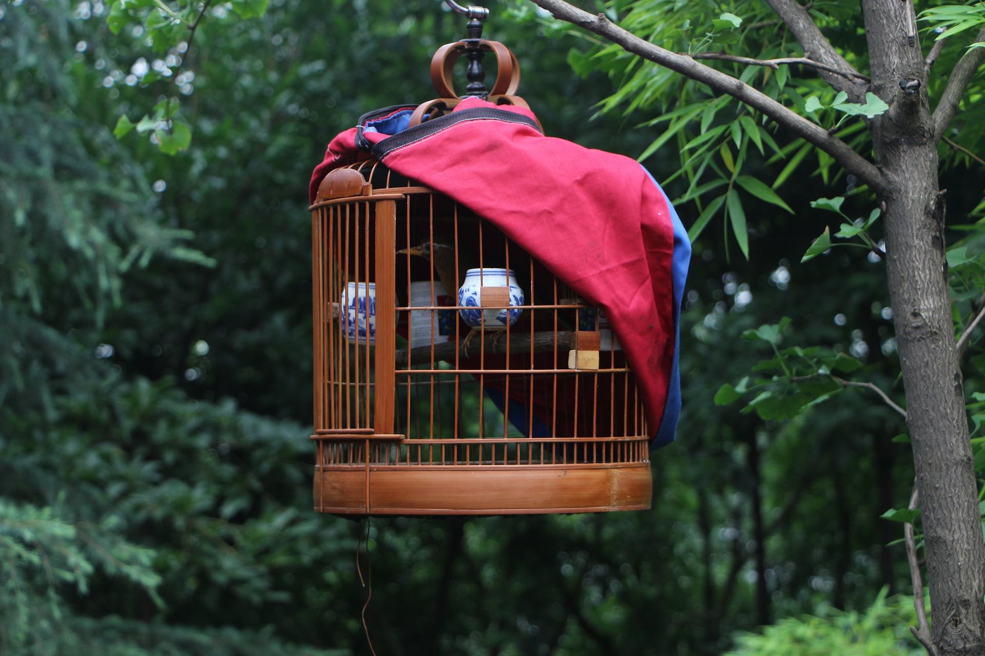 birdcage-2245074_1920.jpg
