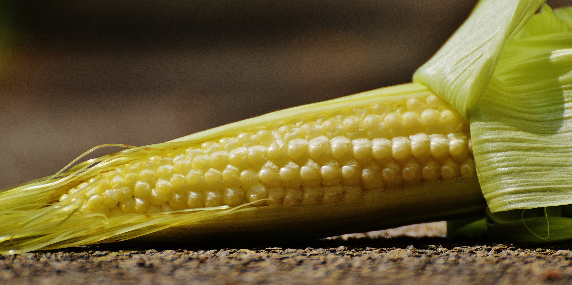 corn-1547888_1920.jpg