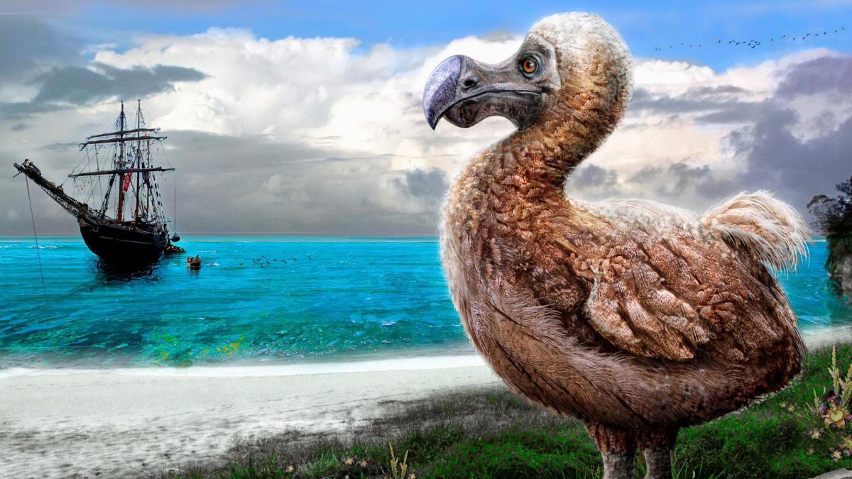 dodo-bird-on-beach-watching-sailing-ship-arrive.jpg