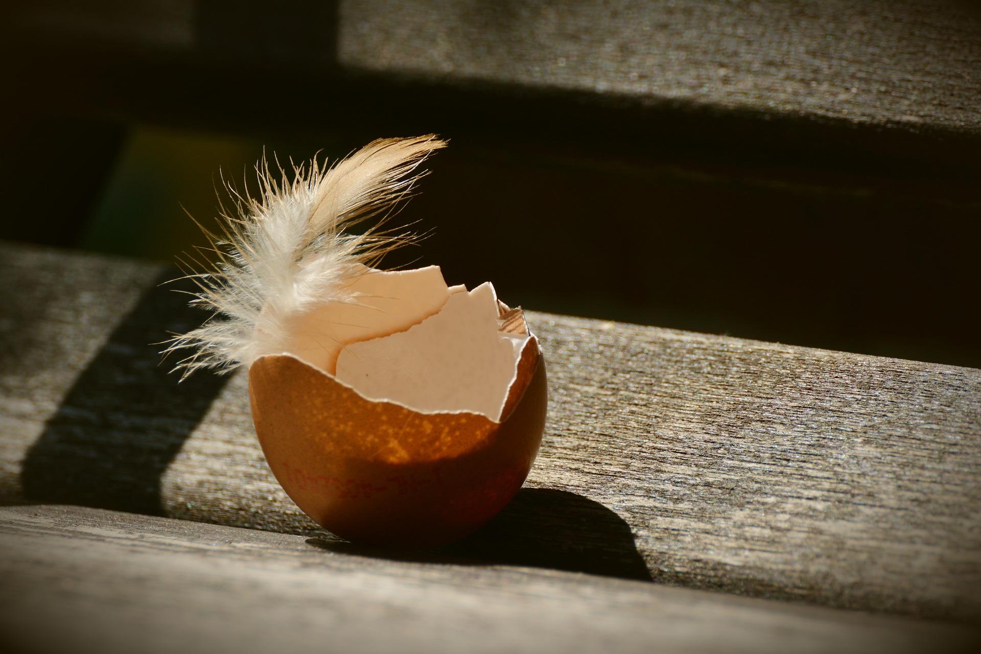 egg-1600502_1920.jpg