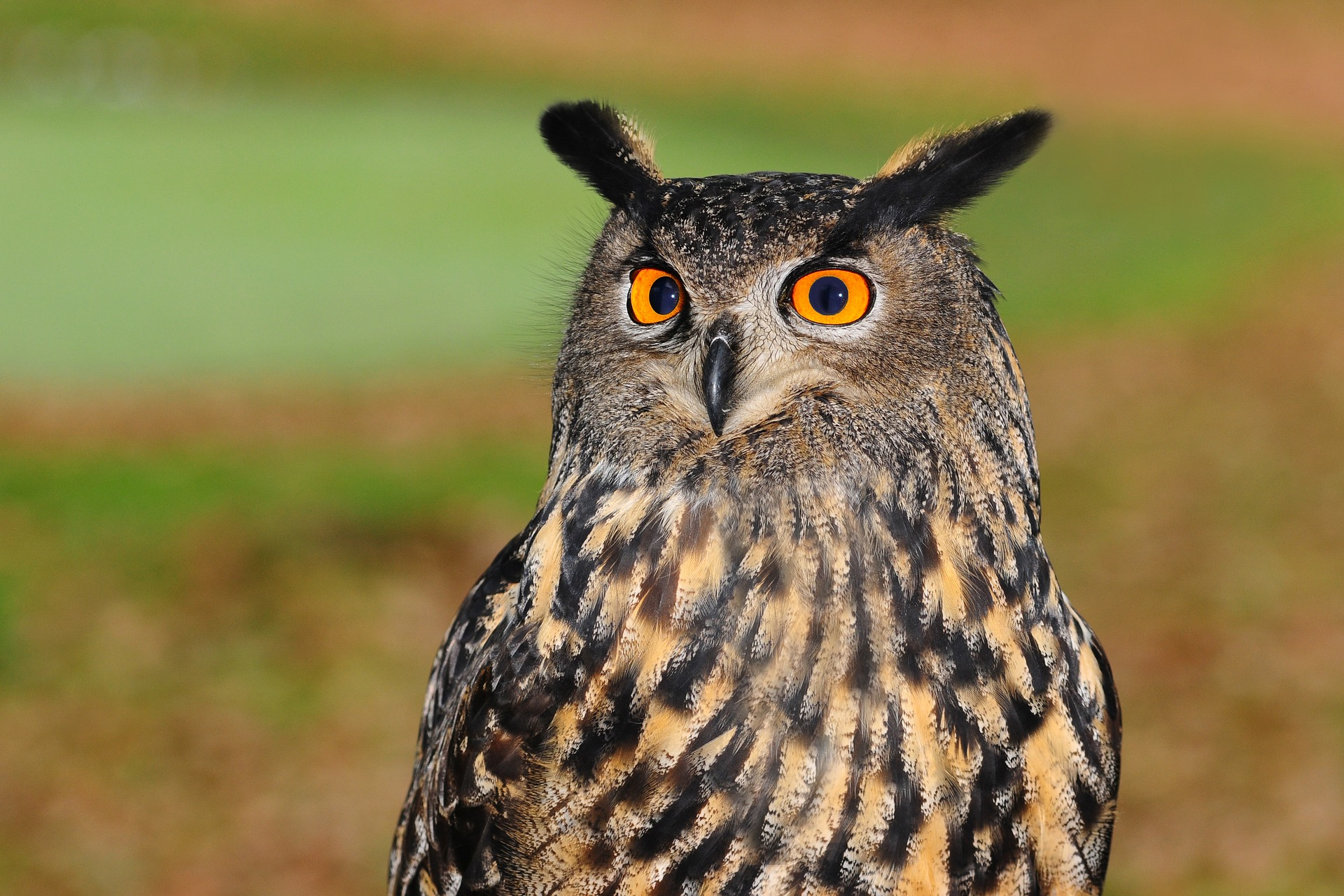 european-eagle-owl-2010346_1920.jpg