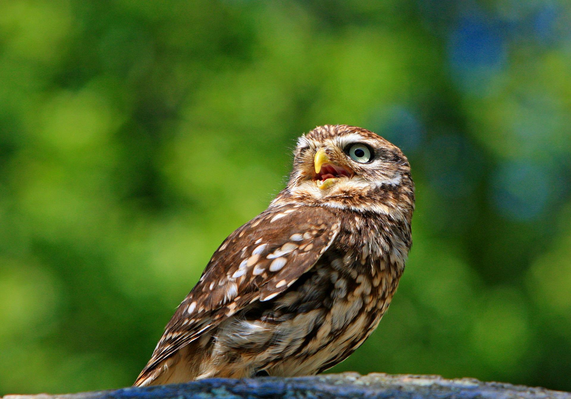 owl-275940_1920.jpg