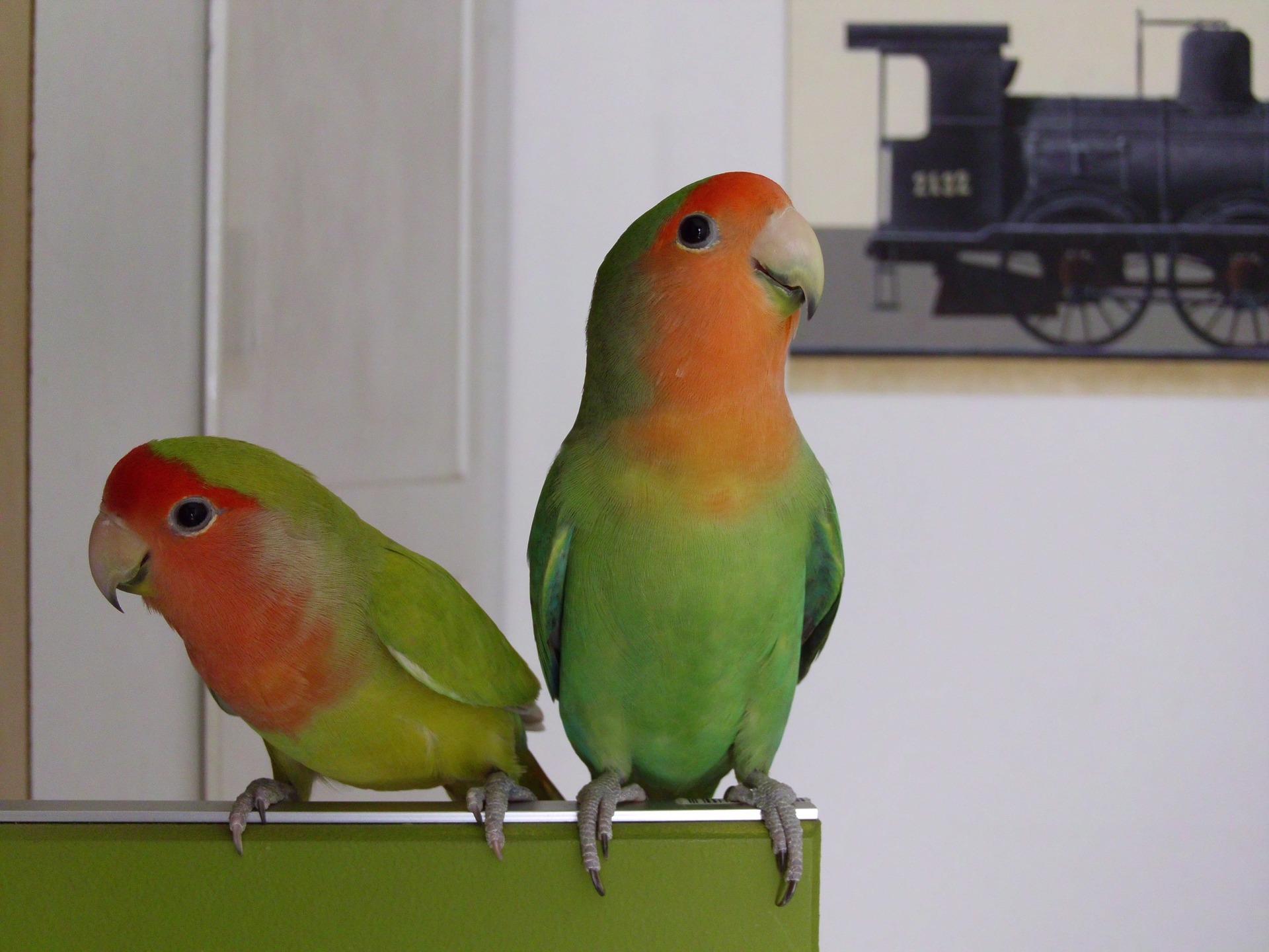 parrot-561875_1920.jpg