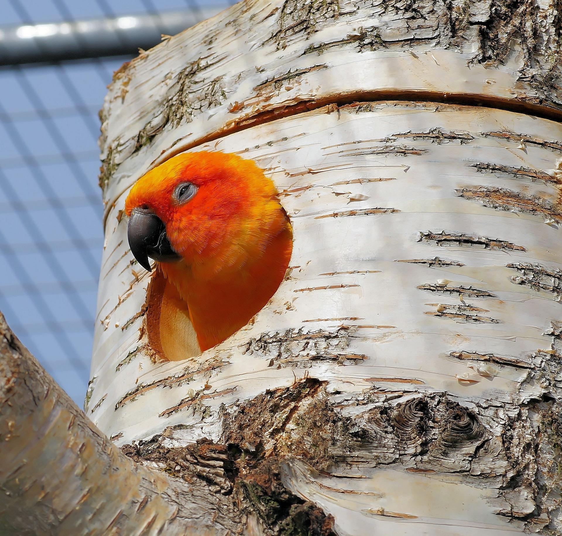 parrot-722857_1920.jpg